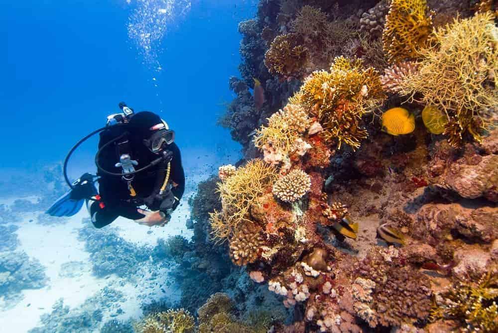 Venture Thrill_Scuba Diving in Australia East Coast
